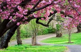 primavera-1890x530